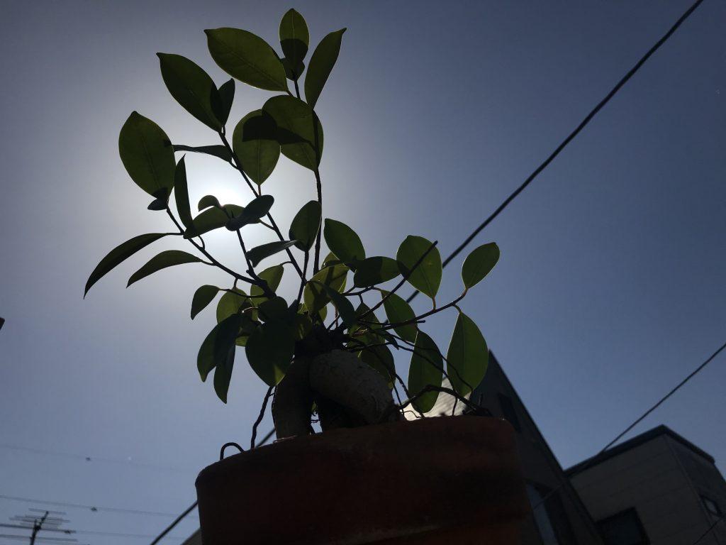 家の植物達!!!